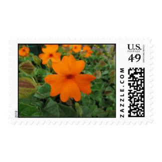 Flor anaranjada de la vid del reloj franqueo