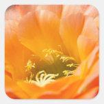 Flor anaranjada de los cactus calcomanía cuadradas personalizadas