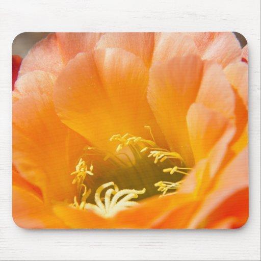 Flor anaranjada de los cactus alfombrillas de raton