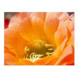 Flor anaranjada de los cactus tarjetas postales