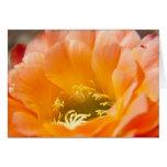 Flor anaranjada de los cactus tarjetón