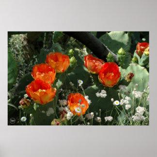 Flor anaranjada del cactus del higo chumbo póster