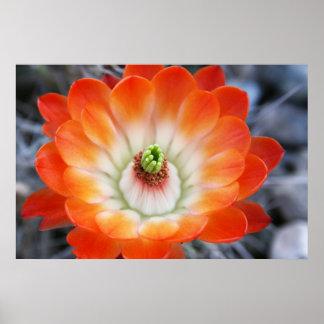 Flor anaranjada del cactus poster