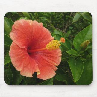 Flor anaranjada del hibisco alfombrilla de ratón
