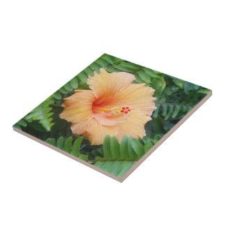 Flor anaranjada del hibisco con los helechos azulejo cuadrado pequeño
