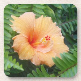 Flor anaranjada del hibisco con los helechos posavaso