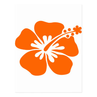 Flor anaranjada del hibisco tarjeta postal