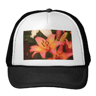 Flor anaranjada del Lilium en la floración Gorros Bordados