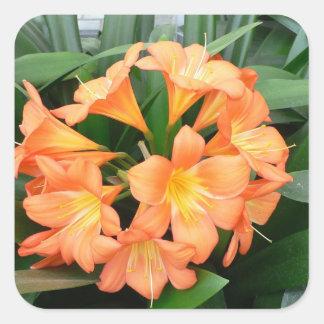 Flor anaranjada del lirio de Bush o lirio natal Calcomanías Cuadradas