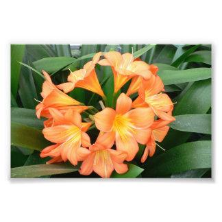 Flor anaranjada del lirio de Bush o lirio natal Arte Fotografico