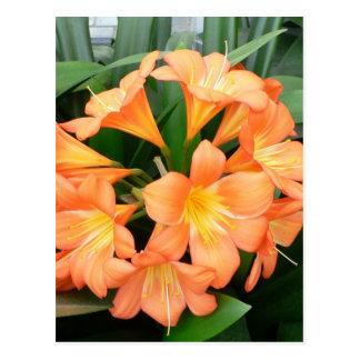 Flor anaranjada del lirio de Bush o lirio natal Tarjeta Postal