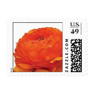 Flor anaranjada del ranúnculo timbre postal
