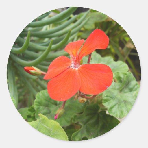 Flor anaranjada etiqueta redonda