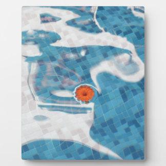 Flor anaranjada flotante de la primavera en agua a placa