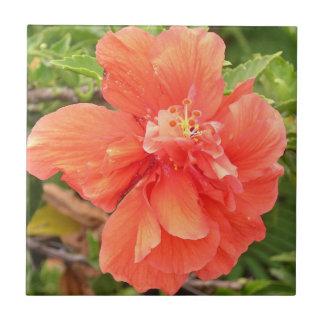 Flor anaranjada hermosa del hibisco azulejo cuadrado pequeño