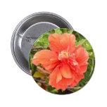 Flor anaranjada hermosa del hibisco pins
