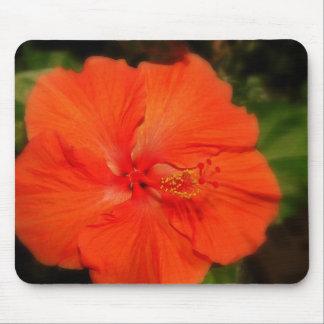Flor anaranjada Mousepad del hibisco Tapete De Raton