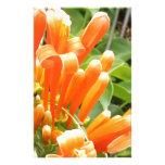 Flor anaranjada papeleria