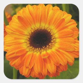 Flor anaranjada pegatina cuadrada