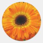 Flor anaranjada pegatinas redondas