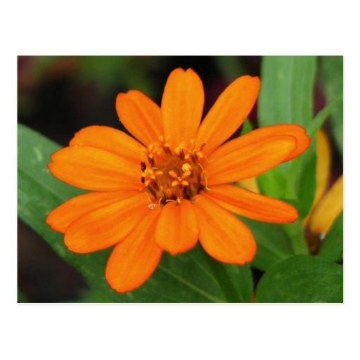 Flor anaranjada postal