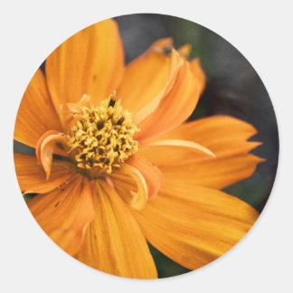 Flor anaranjada (regalo) pegatina redonda