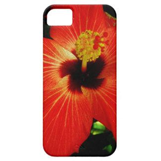 Flor anaranjada roja brillante del hibisco iPhone 5 coberturas