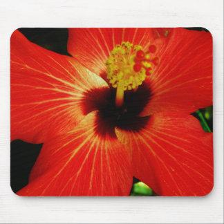 Flor anaranjada roja brillante del hibisco