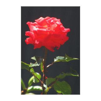 Flor anaranjada roja hermosa impresión en lienzo