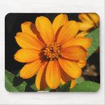 Flor anaranjada tapete de ratones