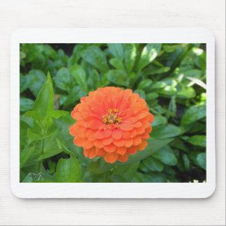 Flor anaranjada tropical Hawaii floral Tapete De Raton