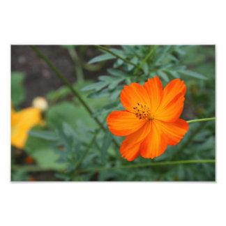 flor anaranjada y amarilla cojinete