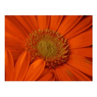 Flor anaranjado del ramo de la flor de la tarjeta postal