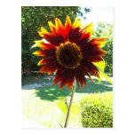 Flor anaranjado oscuro hermosa adaptable postales