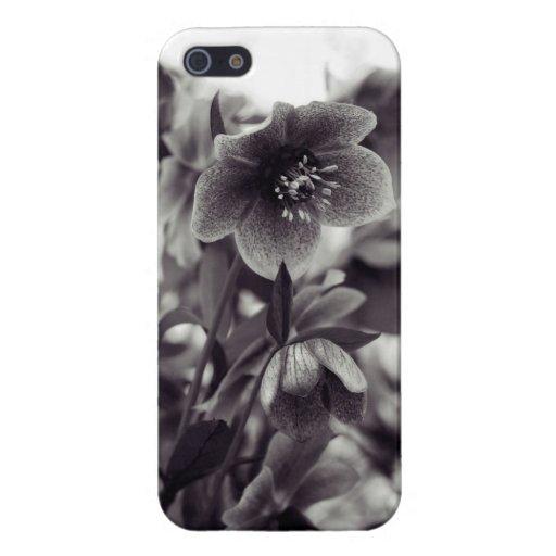 Flor artsy blanco y negro iPhone 5 protectores