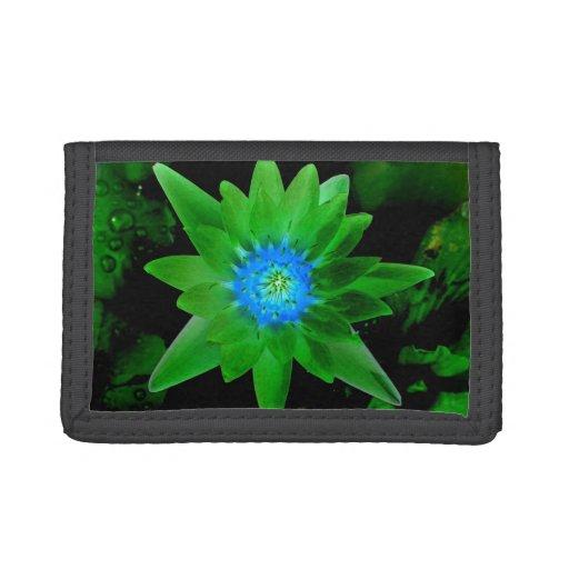 flor aseada verde del lirio de agua contra las hoj