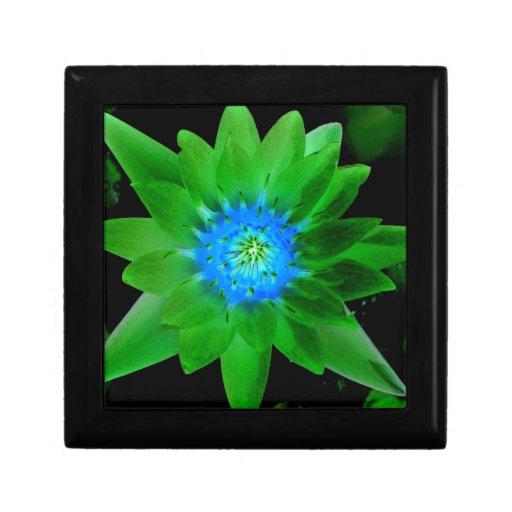 flor aseada verde del lirio de agua contra las hoj joyero cuadrado pequeño