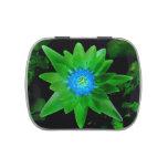 flor aseada verde del lirio de agua contra las hoj frascos de dulces