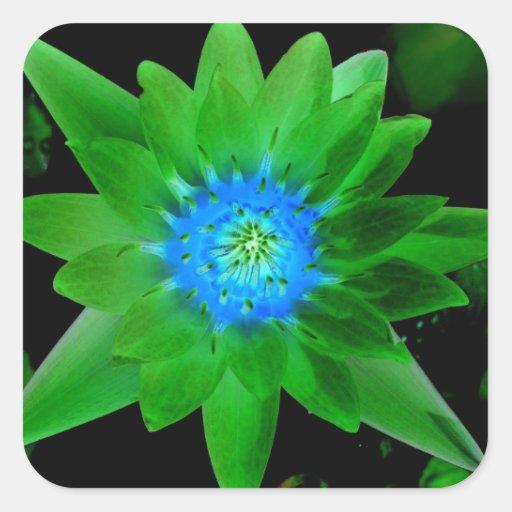 flor aseada verde del lirio de agua contra las hoj calcomania cuadradas