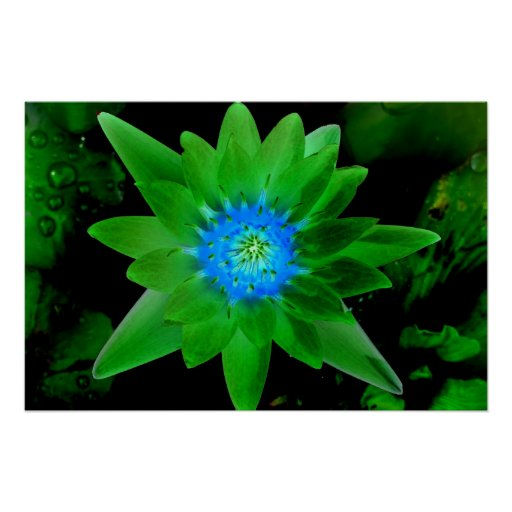 flor aseada verde del lirio de agua contra las hoj póster