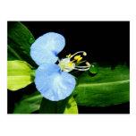flor asiática del día tarjetas postales