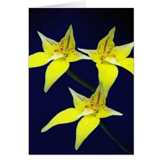 Flor australiana amarilla de la orquídea de tarjeta de felicitación