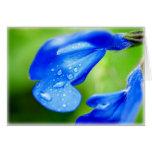 Flor azul azul felicitaciones