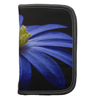 Flor azul bonita hermosa en negro organizador