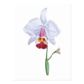 Flor azul clara y rosada postal