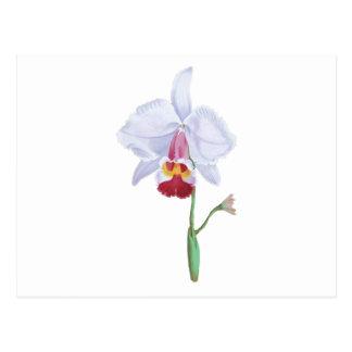 Flor azul clara y rosada tarjetas postales
