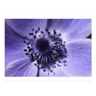 Flor azul de la anémona del bígaro tarjeta postal