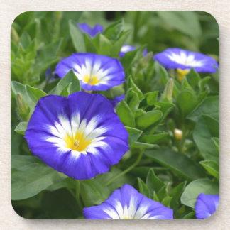 Flor azul de la correhuela de la bandera posavasos de bebidas