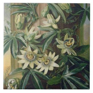 """Flor azul de la pasión para el """"templo de la flora azulejo cuadrado grande"""