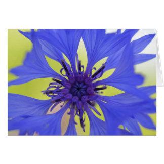 Flor azul de la primavera tarjeta de felicitación